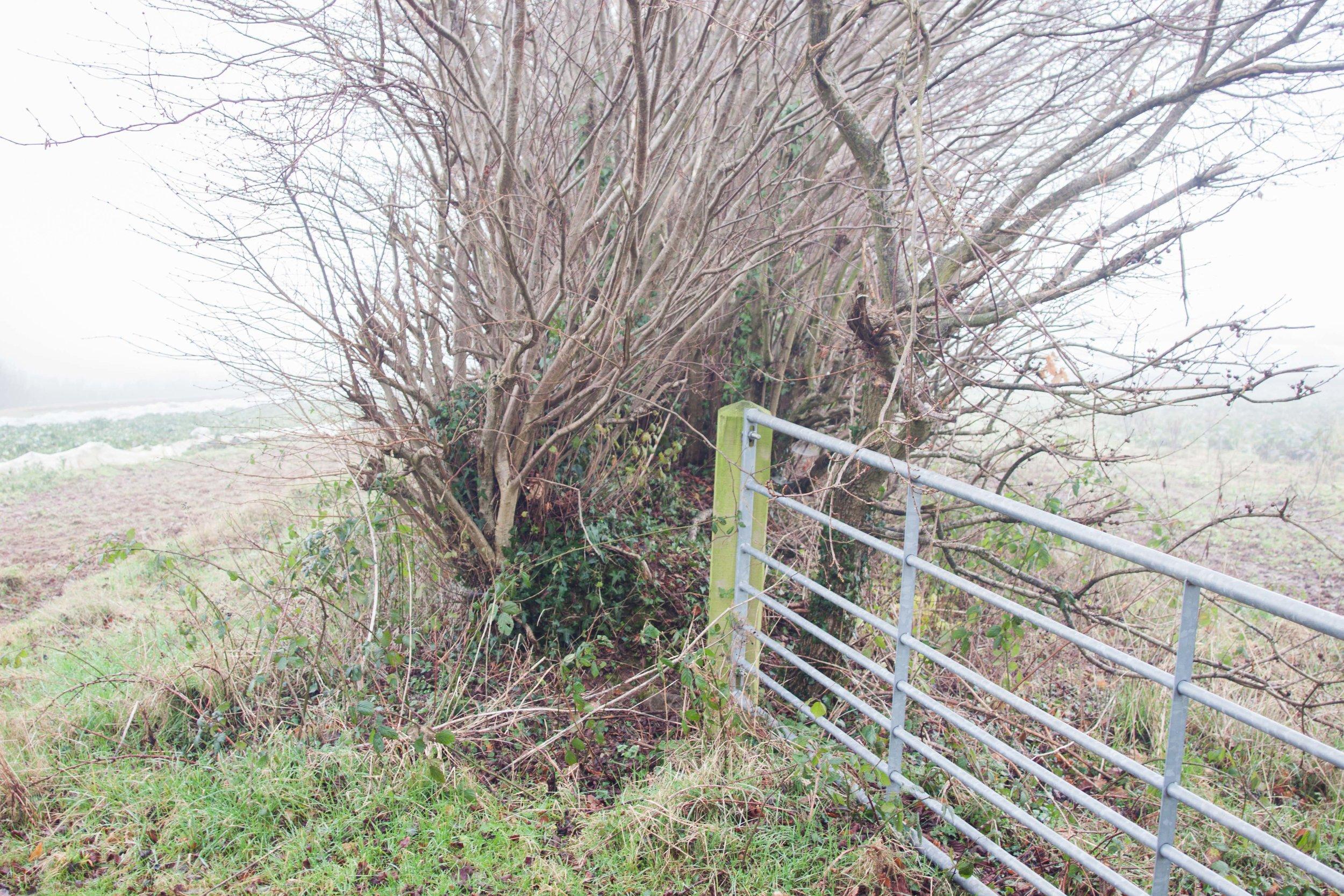 plowright_organic_hedge
