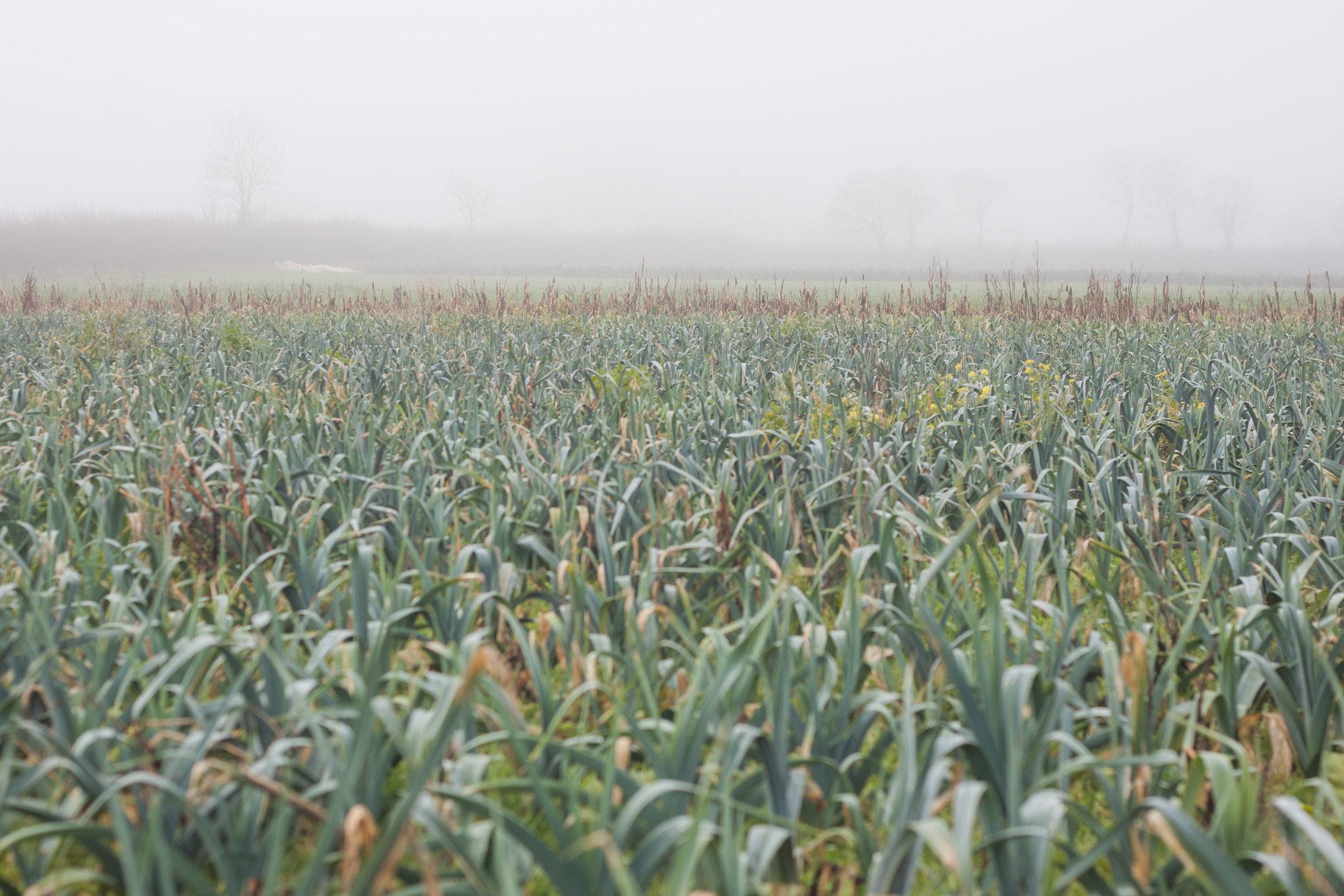 plowright_organic_field