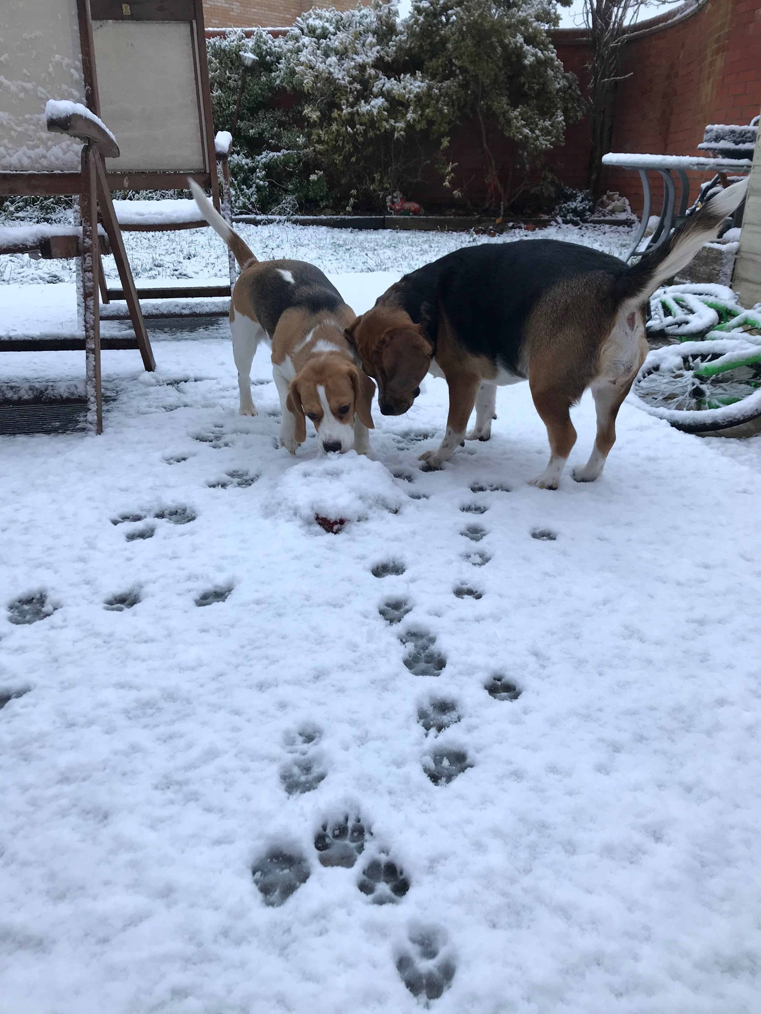 My two loving the snow and a Freshpet treat.