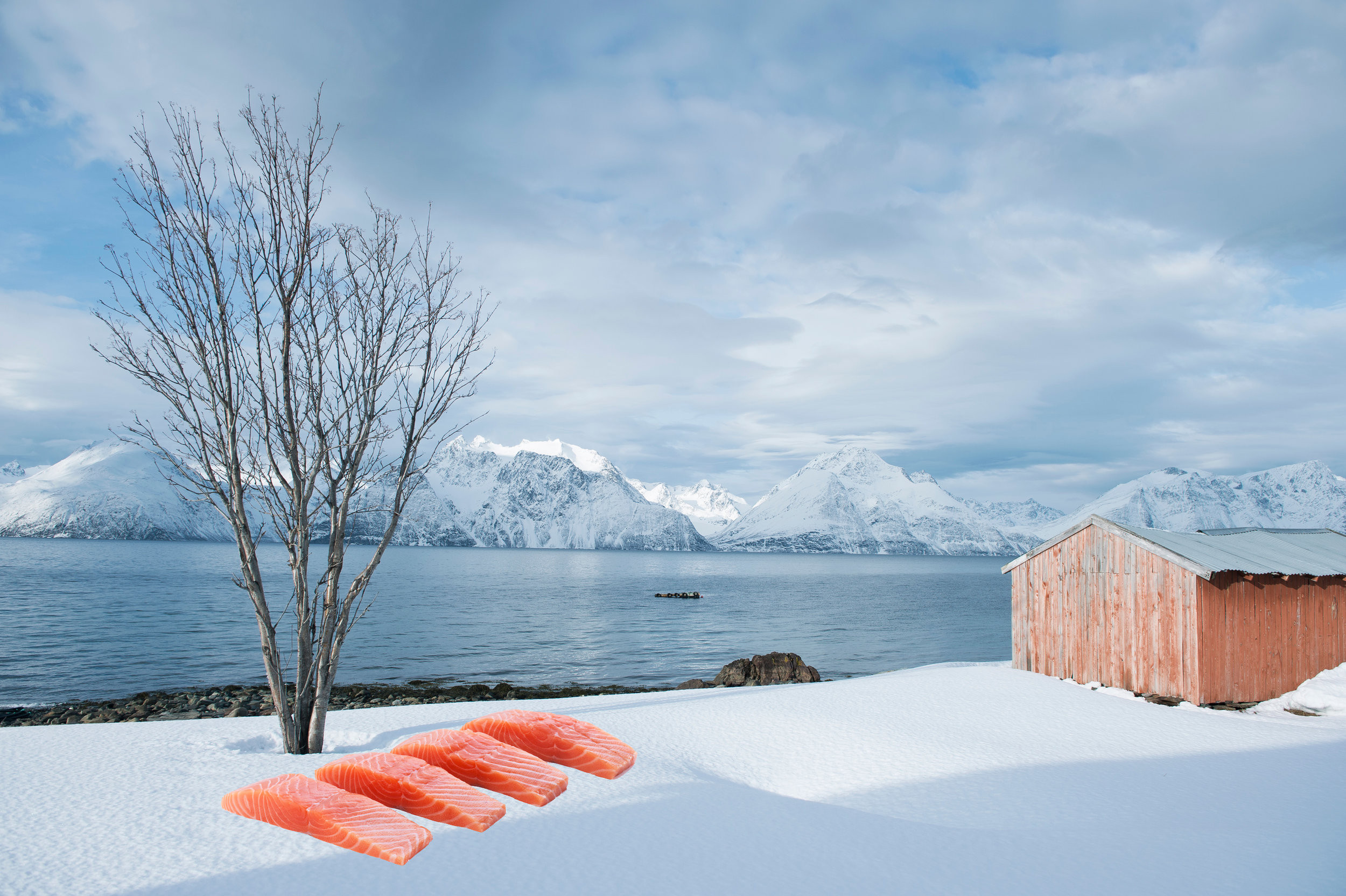 Norway in a Box Salmon on snow.jpg