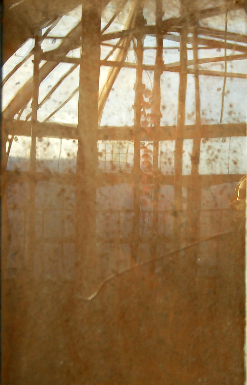 Glasshouse iv
