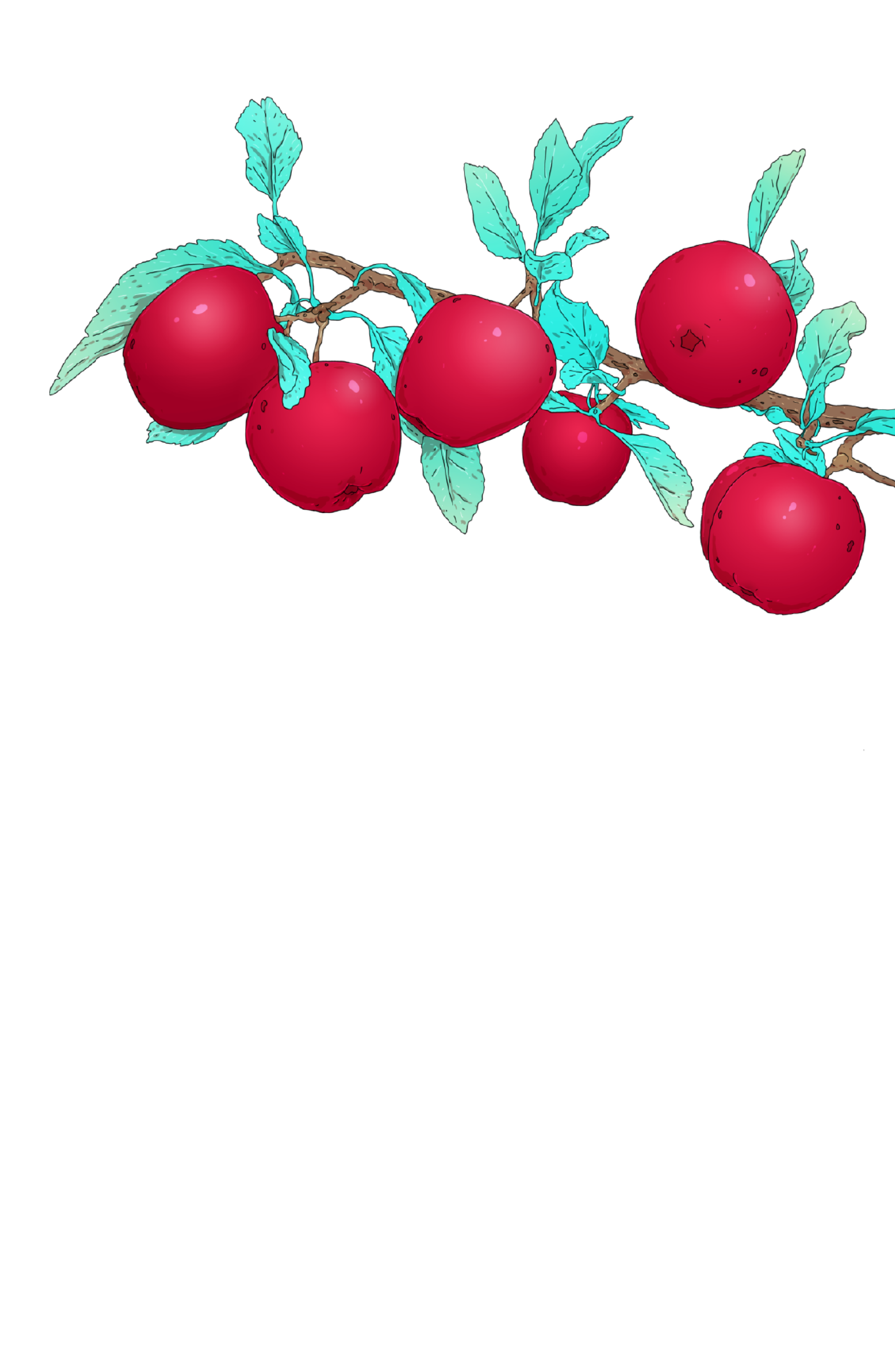 Apples_coming soon-01.png