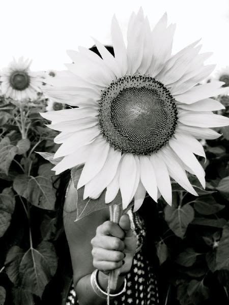yoga-love-sunflower.jpg