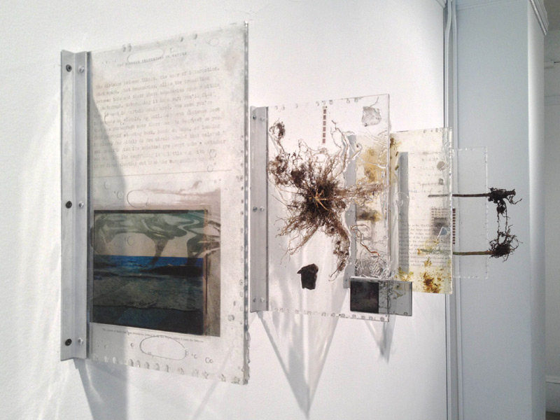 """""""The Distance Between Things"""" (2013)<br>Plant, resin, paint, acrylic, celluloid, photographic transparencies, petrified wood, lenses, mirror.  <br>Ea.18 x 12 inches"""