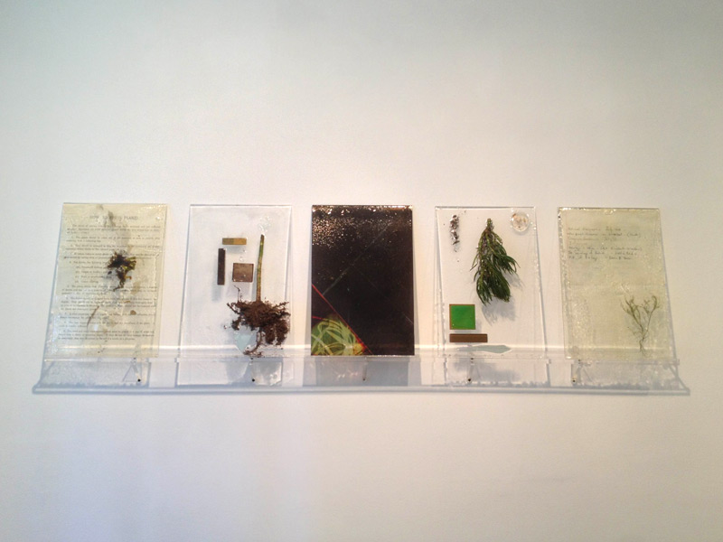 """""""The Distance Between Things"""" (2013)<br>Plant, resin, paint, acrylic, celluloid, photographic transparencies, petrified wood, lenses, mirror. <br>Ea. 18 x 12 inches"""