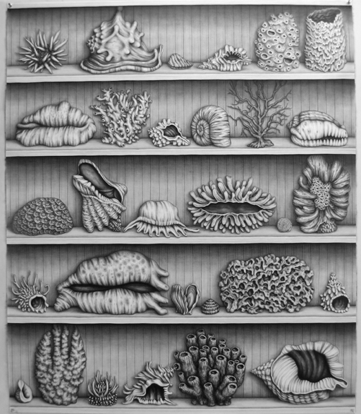 "Frank Magnotta  ""Shelled Shelf"" (2010) Graphite on paper, 50 x 42 in."