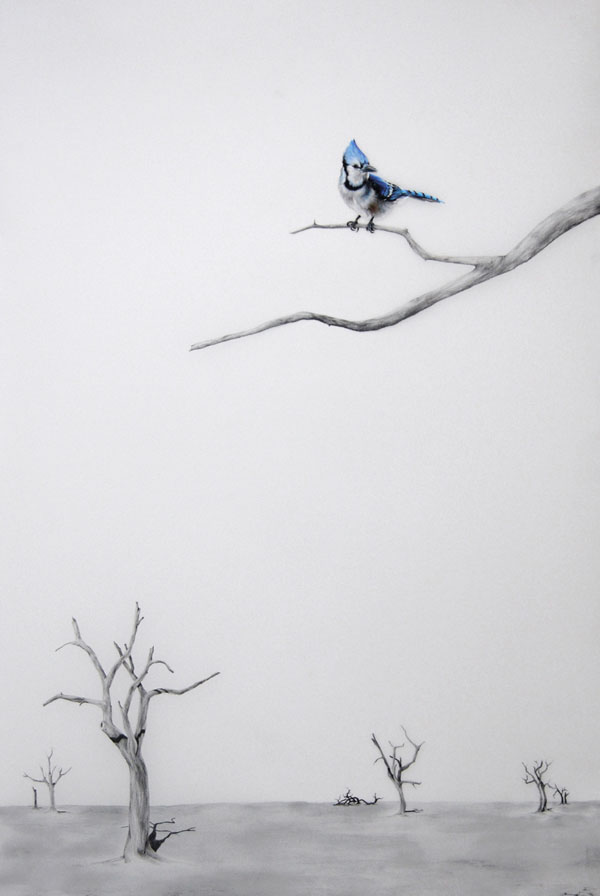 """Blue Bird I"" (2010) Oil and graphite on mylar, 30 x 41 in."
