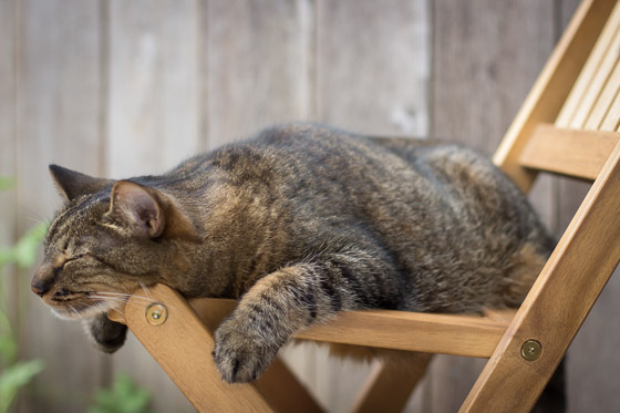 Cat sleeping on wooden chair outside.