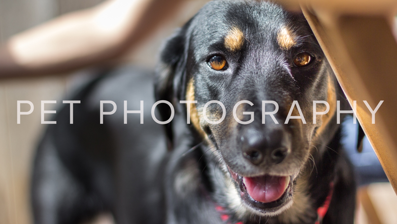 Black dog with brown eyebrows smiling and looking at camera from eye level.