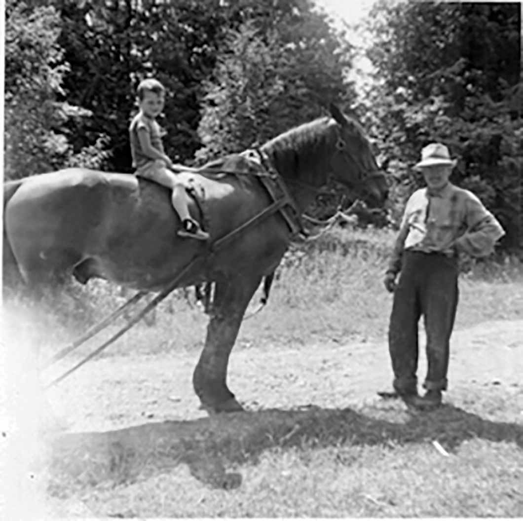 Willie Mulrooney's workhorse Nellie features in many memories of visitors to his cottages on Stoco Lake, and Mulrooney himself is remembered as a popular figure. Photo courtesy Judi Libman / The Tweed News