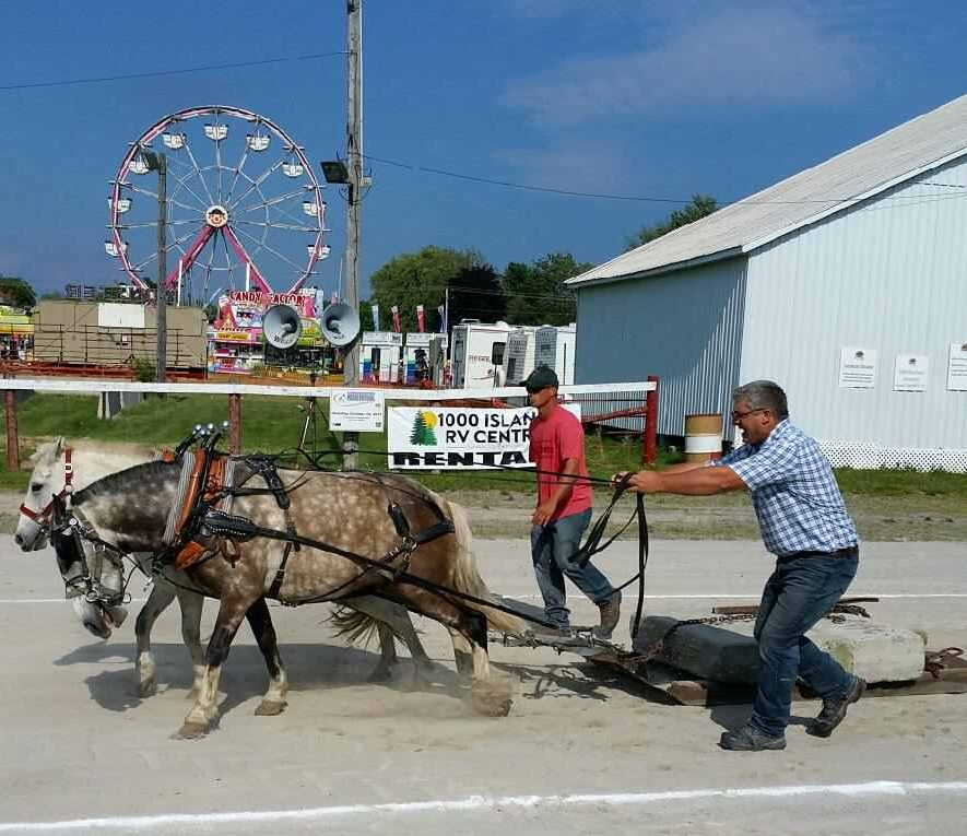 What makes the Stirling Agricultural Fair so special is their attention to the Agricultural shows such as - Horse/Pony Pulls, Horse Show, 4-H, Beef show, goat show and sheep shearing.