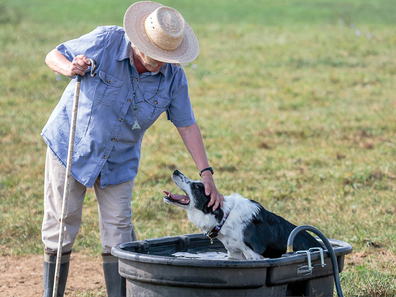 'Scott' gets a well-earned cooldown at the USBCHA National Finals. He belonged to Tara's friend Vergil Holland, a renowned trainer, breeder and handler from Kentucky. Photo © Michelle Lawrence, All Rights Reserved