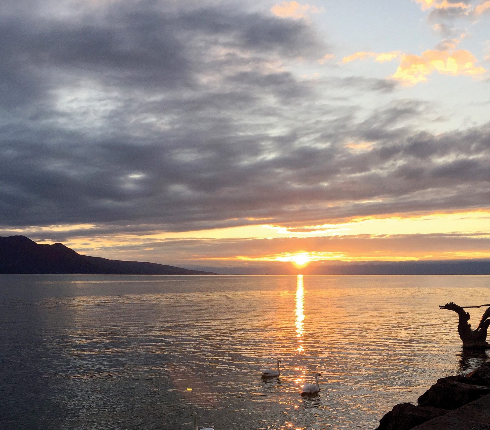 Lake Leman / Lake Geneva at sunset, complete with swans – not unlike Lake Ontario.