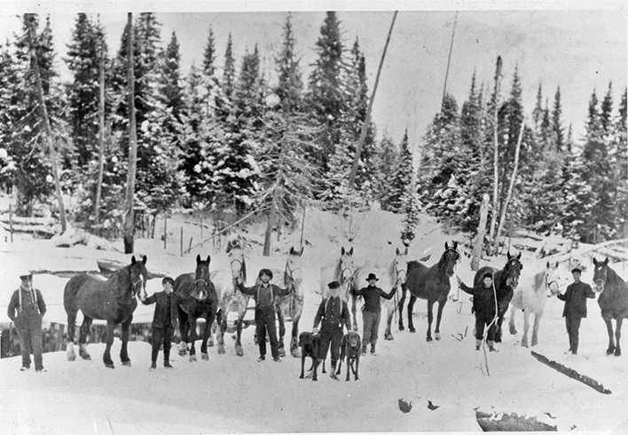 "This group of teamsters with their workhorses was on an  Algonquin Park  lumber camp payroll in 1911. Such a team figured in the tale of "" The Bunkhouse Buck .""  Dan Campbell photo, courtesy J. Macfie, Penhale Collection."