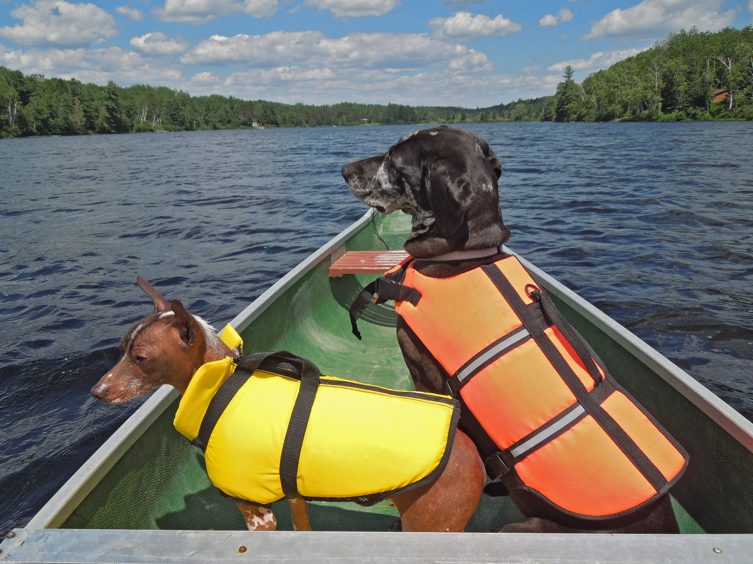 Heather Cowley – Canoeing Canines: Xak and Bounty never pass up an opportunity for a ride in the canoe or chance to practice safe boating; Lake St. Peter, Ontario.