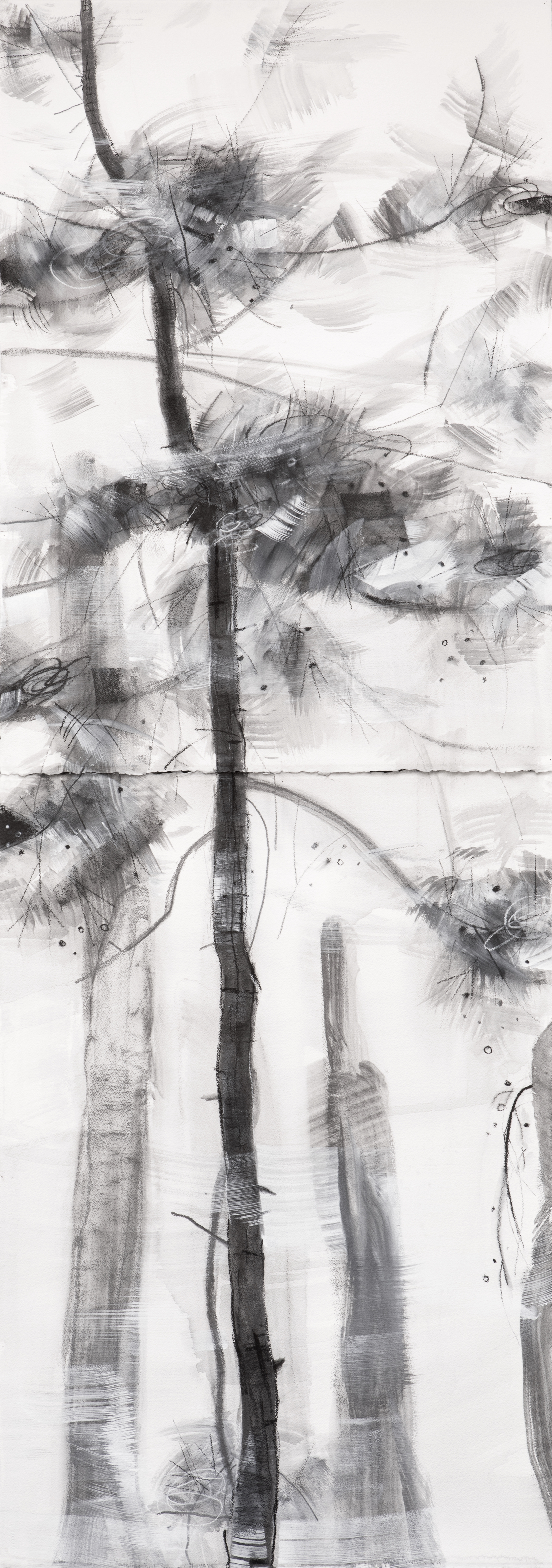 Young Pine, fresh breeze - Zahnjiajie, 2018, White Acrylic, Graphite and Pigment on 640 gsm Arches, 212 x 76cm.jpg