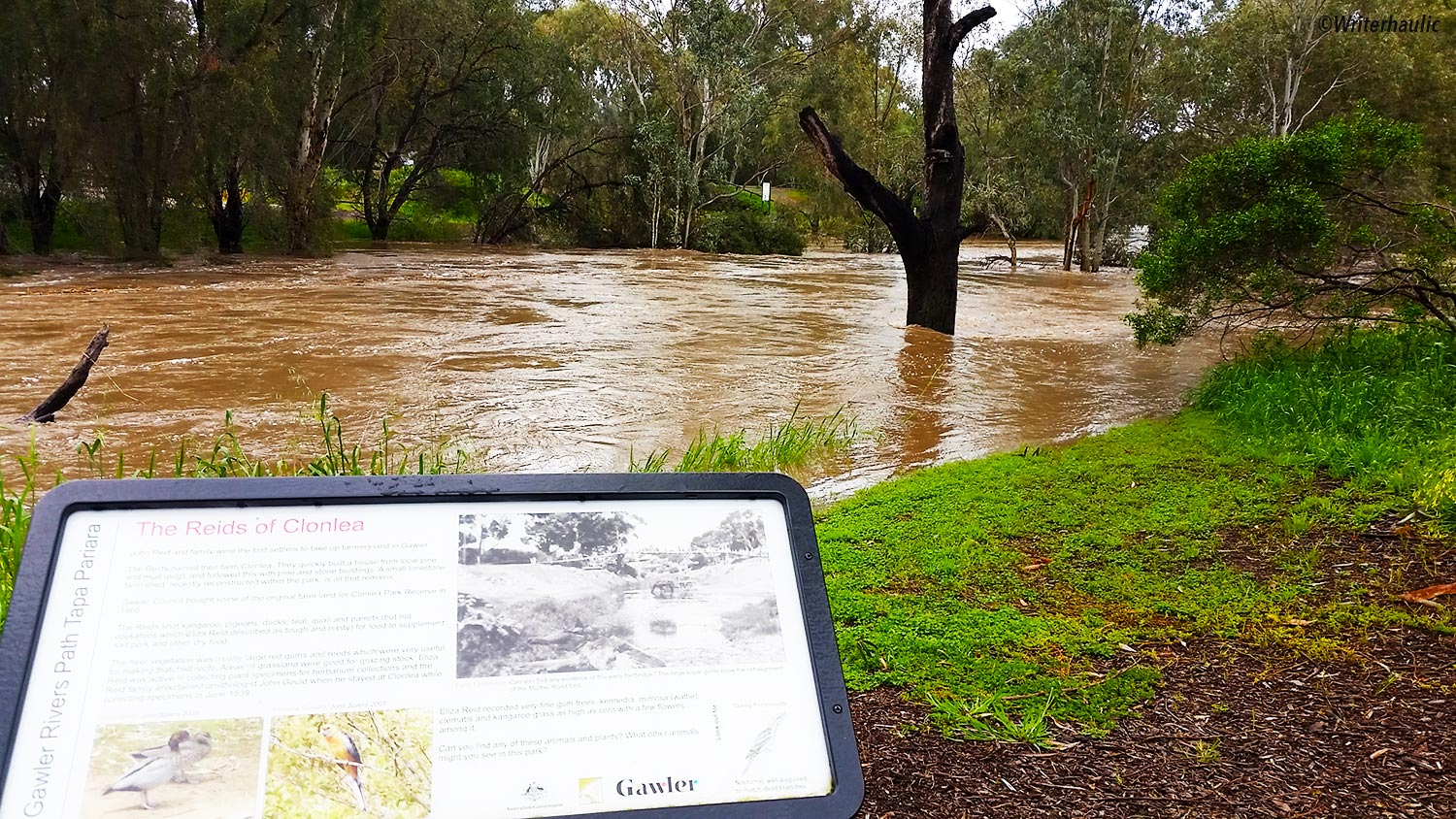 The water is rushing fiercely at the Murray Road ford near Clonlea Park:  Photo: Writerhaulic