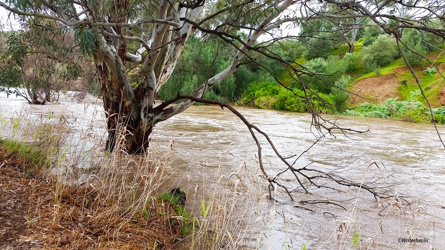 Water rushes quickly along the North Para River next to Riverview Drive in Hewett  Photo: Writerhaulic