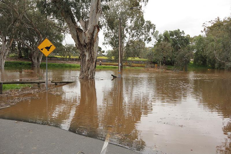 No Bridge and no ducks  Photo: Janette Menhennet