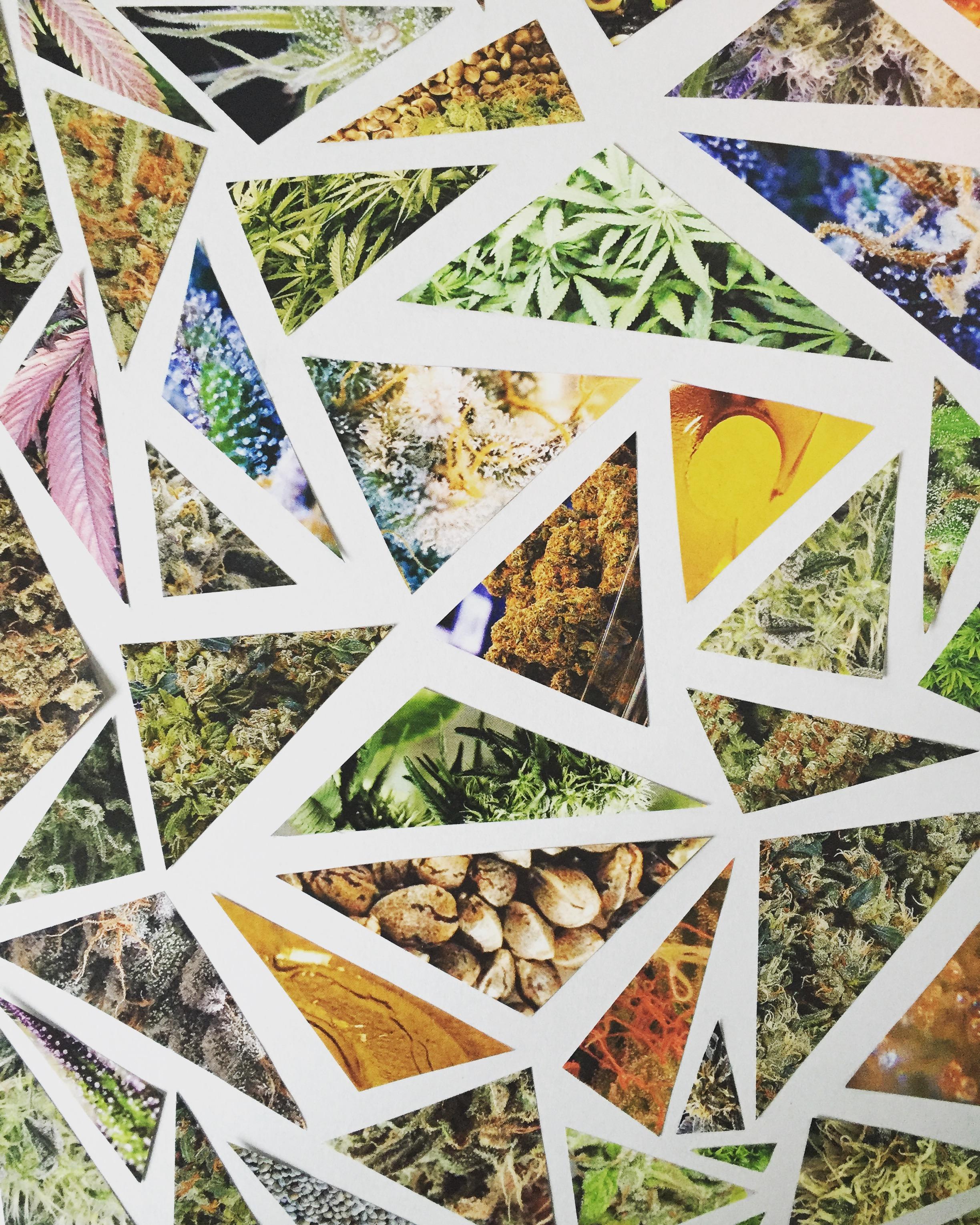 high times magazine cannabis collage