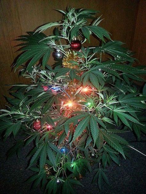 cannabis christmas tree
