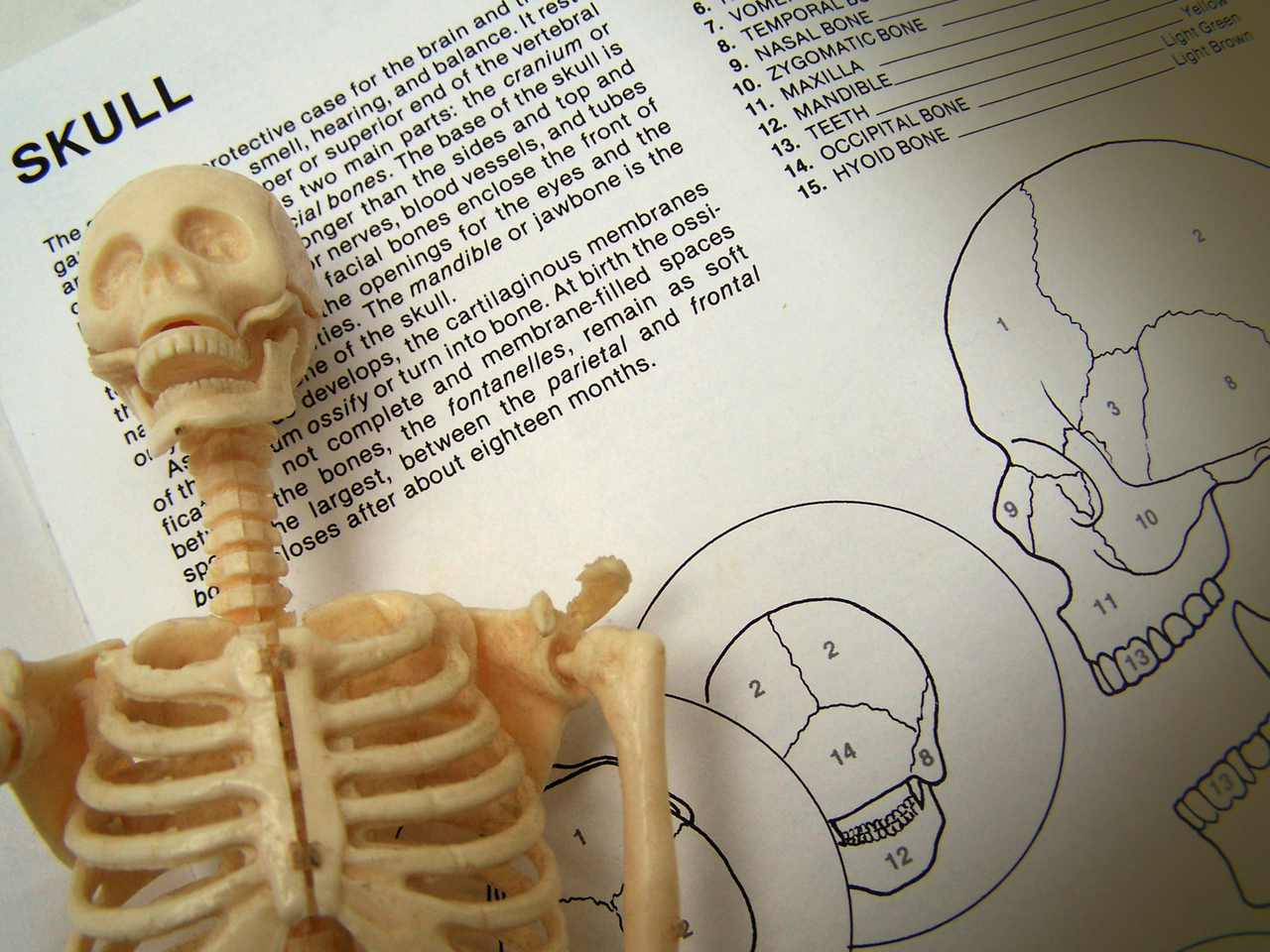 Bones are important and stuff!
