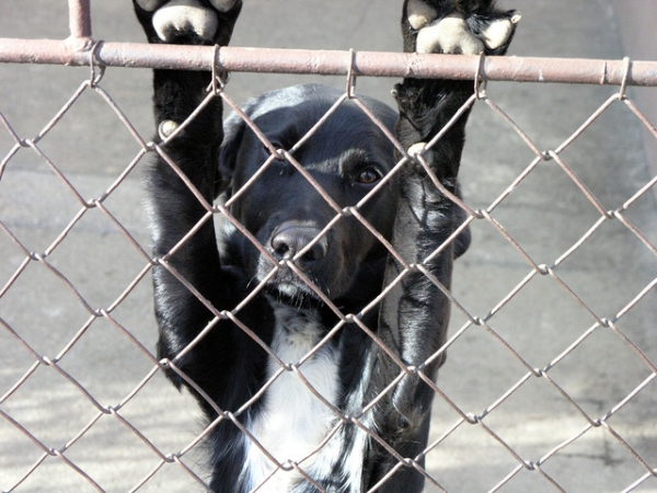 dog-in-distress-1379715-640x480.jpg