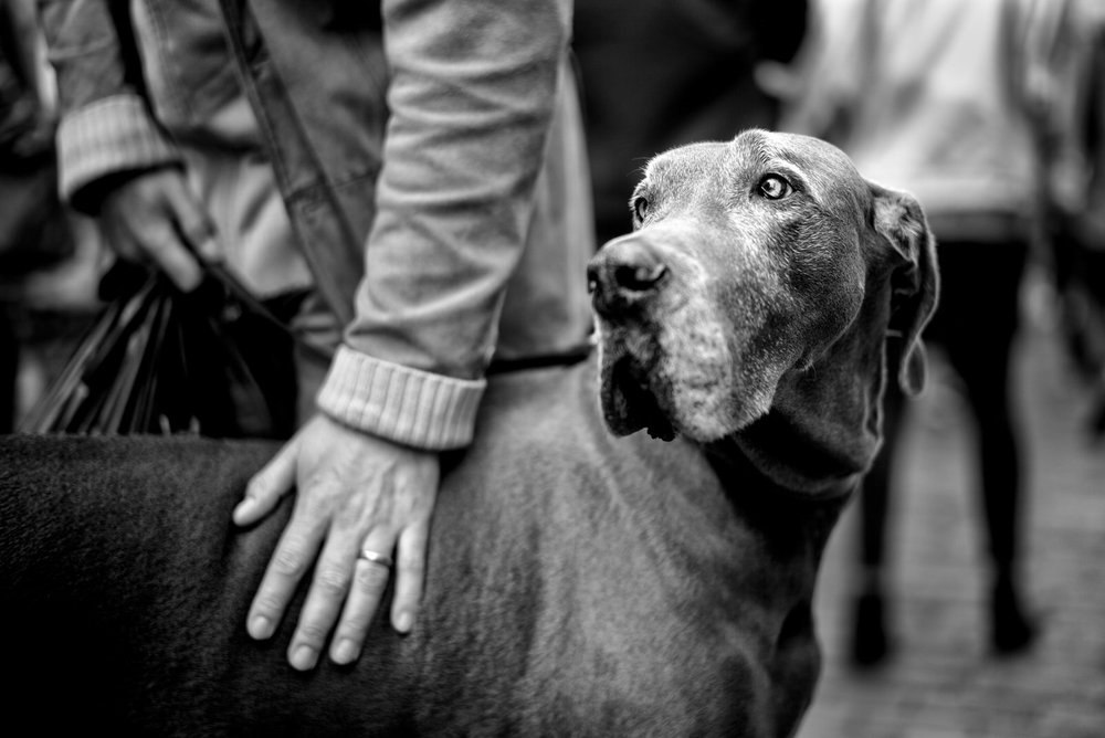 Alan Schaller - Street Photographer - Dogs 4.jpg