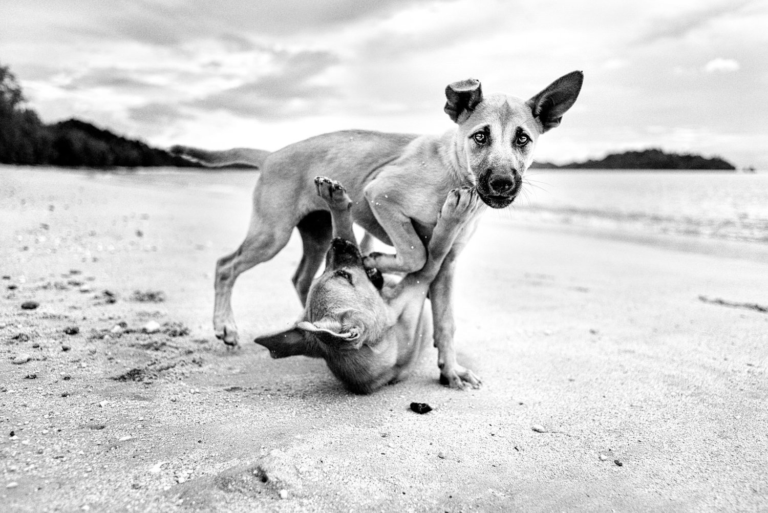 Alan Schaller - Street Photographer - Dogs 7.jpg