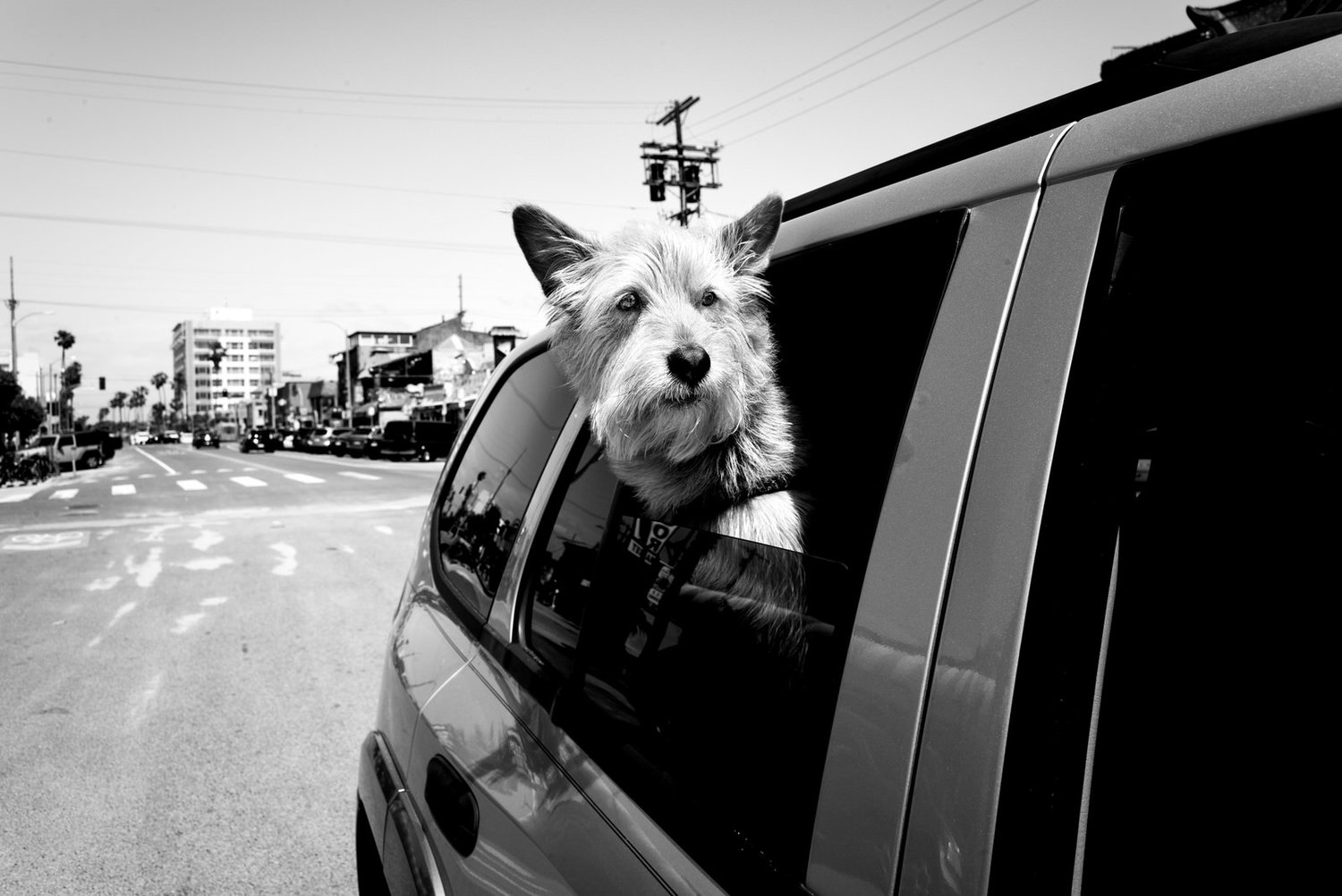 Alan Schaller - Street Photographer - Dogs 8.jpg
