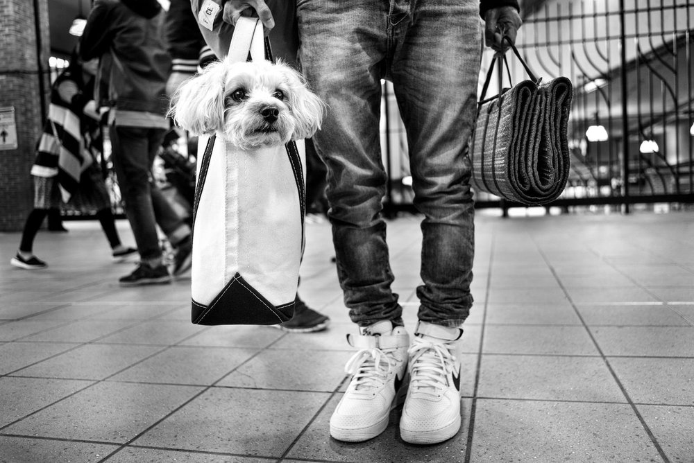 Alan Schaller - Street Photographer - Dogs 14.jpg