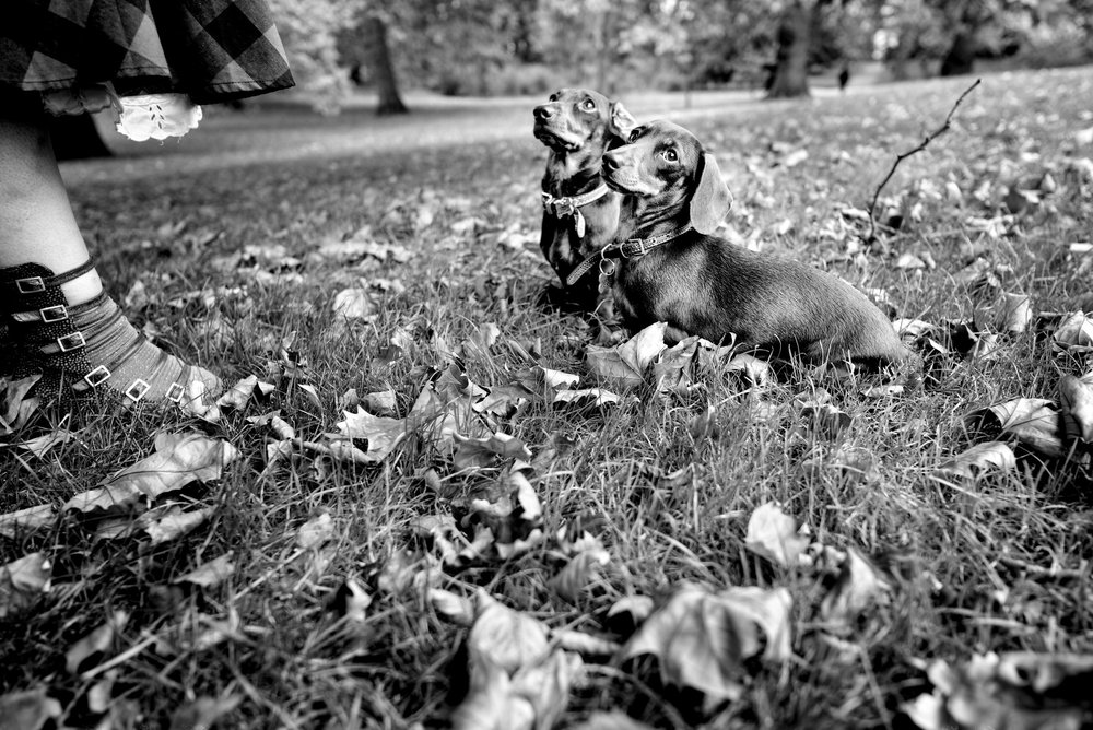 Alan Schaller - Street Photographer - Dogs 26.jpg