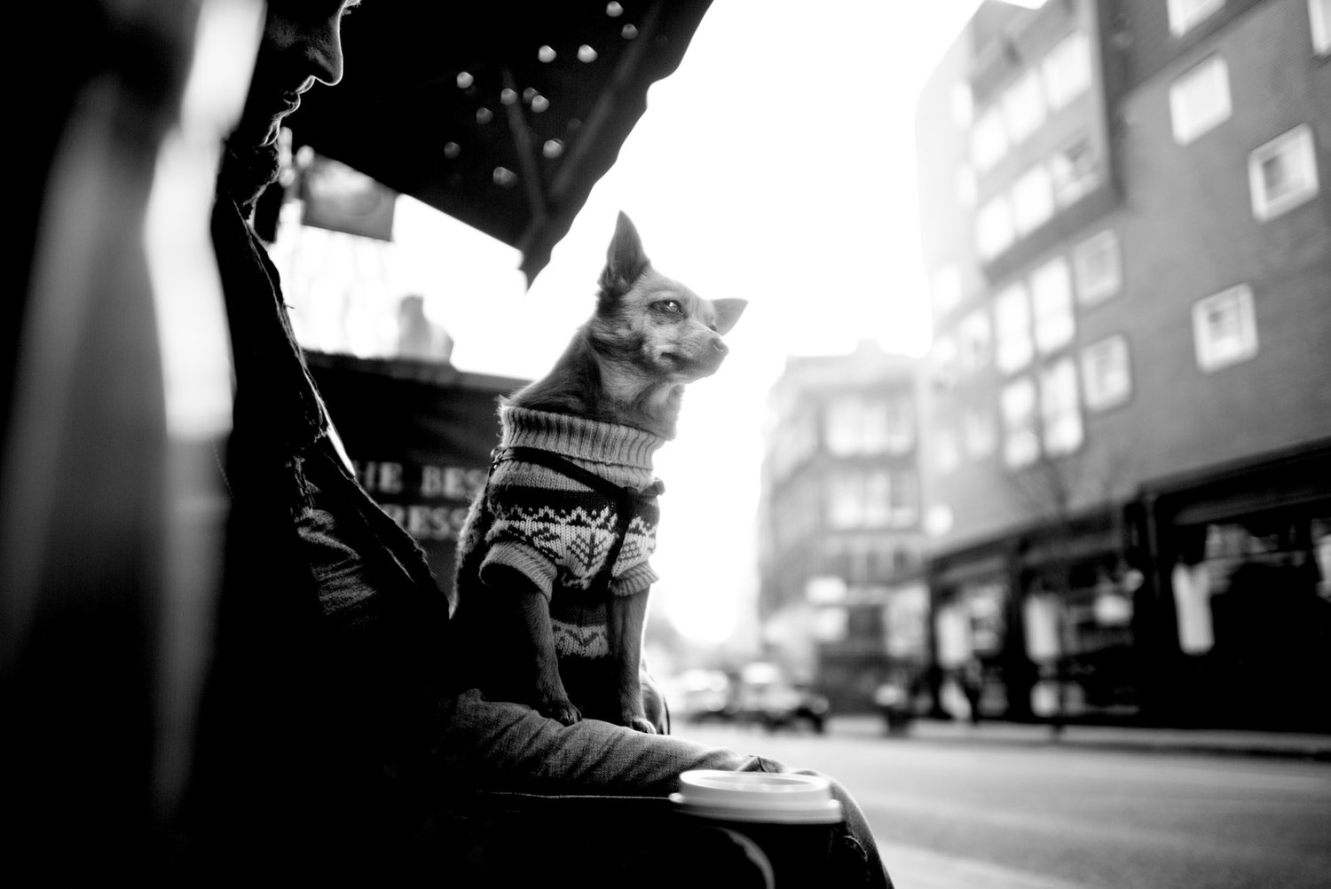 Alan Schaller - Street Photographer - Dogs 33.jpg