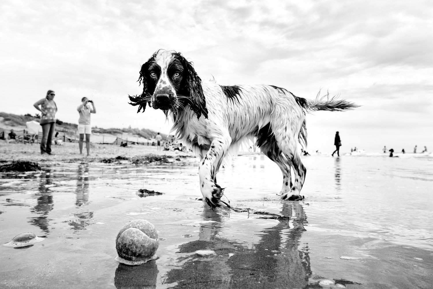 Alan Schaller - Street Photographer - Dogs 34.jpg