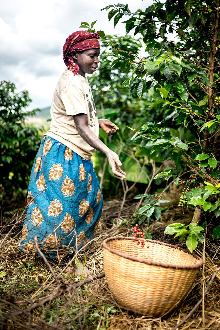 Alan Schaller - London Photojournalist - Rwandan Coffee 10.jpg