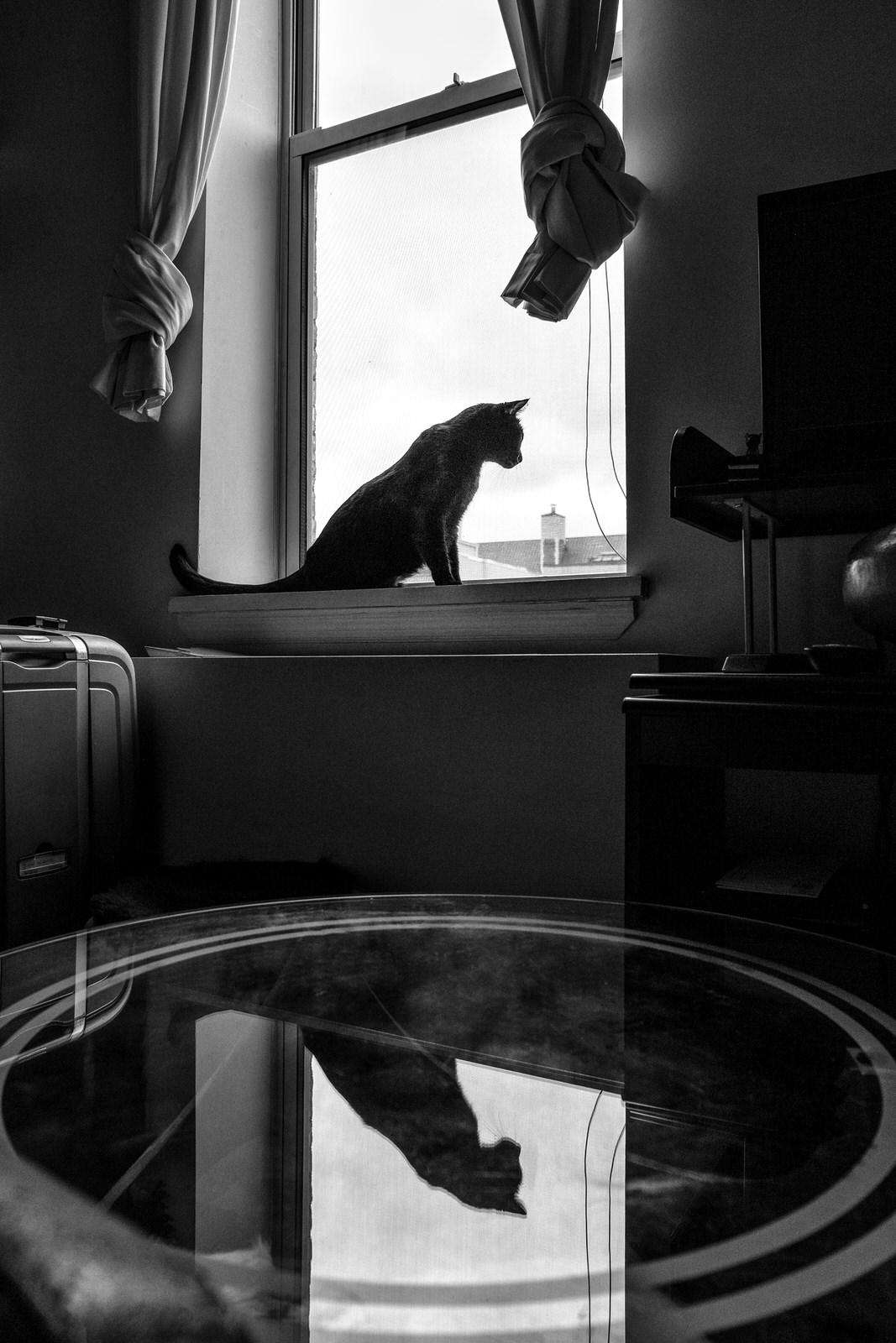 Alan Schaller Manhattan 18.jpg