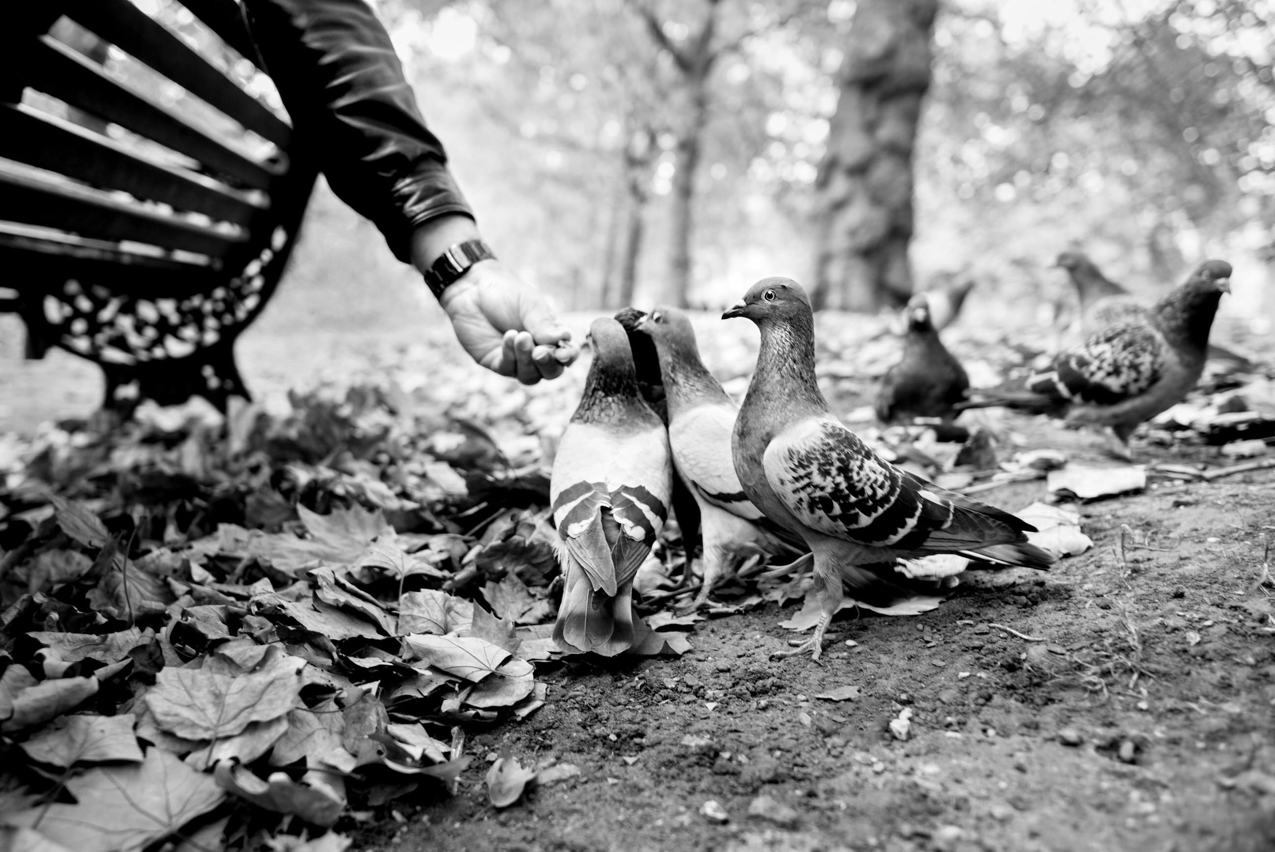 Pigeon Series - Alan Schaller - 5.jpg