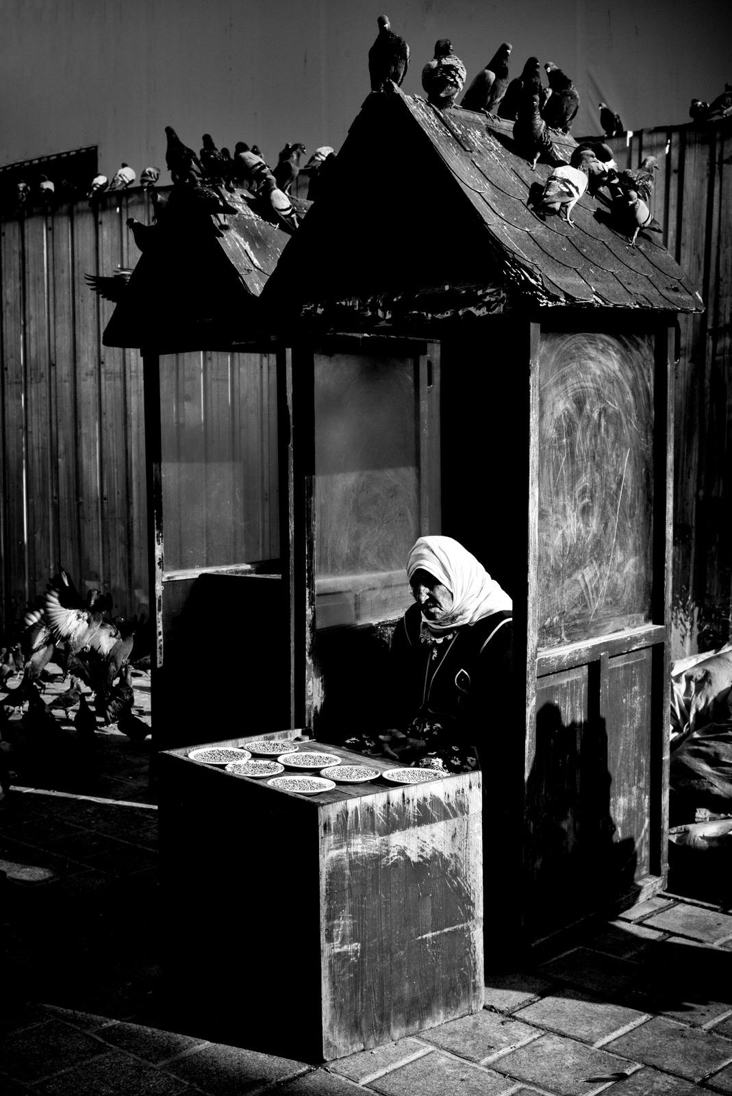 Pigeon Series - Alan Schaller - 7.jpg