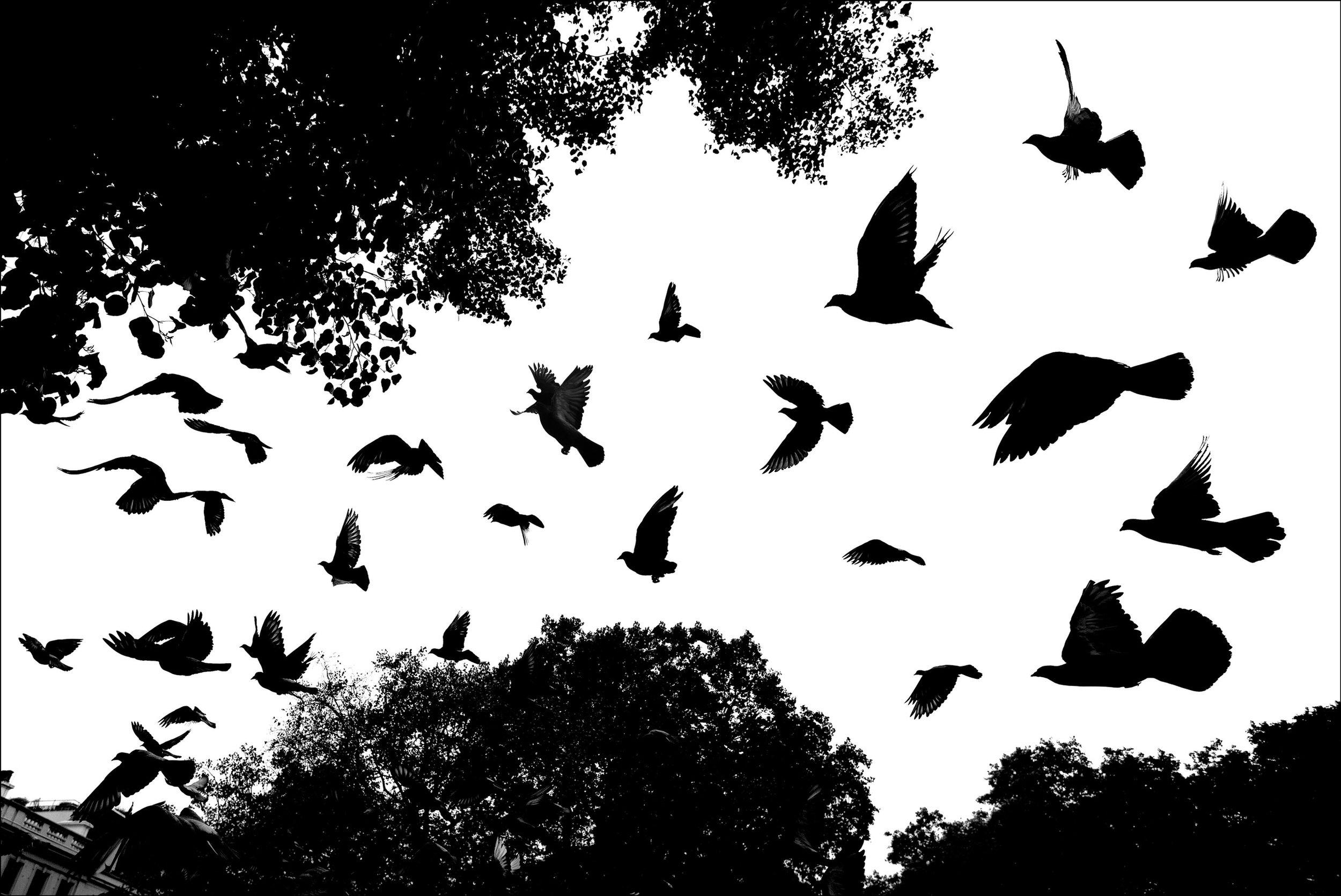 Pigeon Series - Alan Schaller - 14.jpg