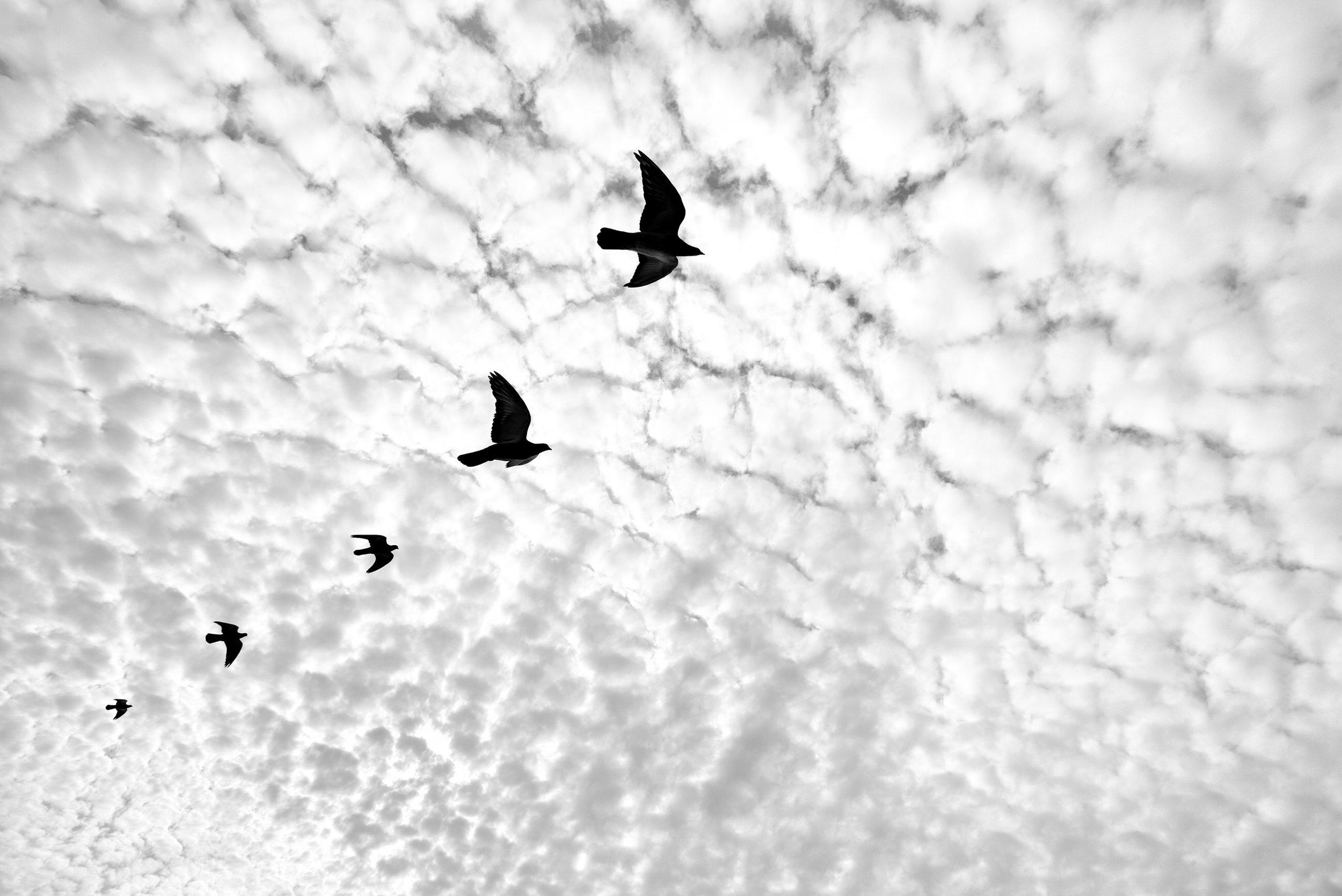 Pigeon Series - Alan Schaller - 18.jpg