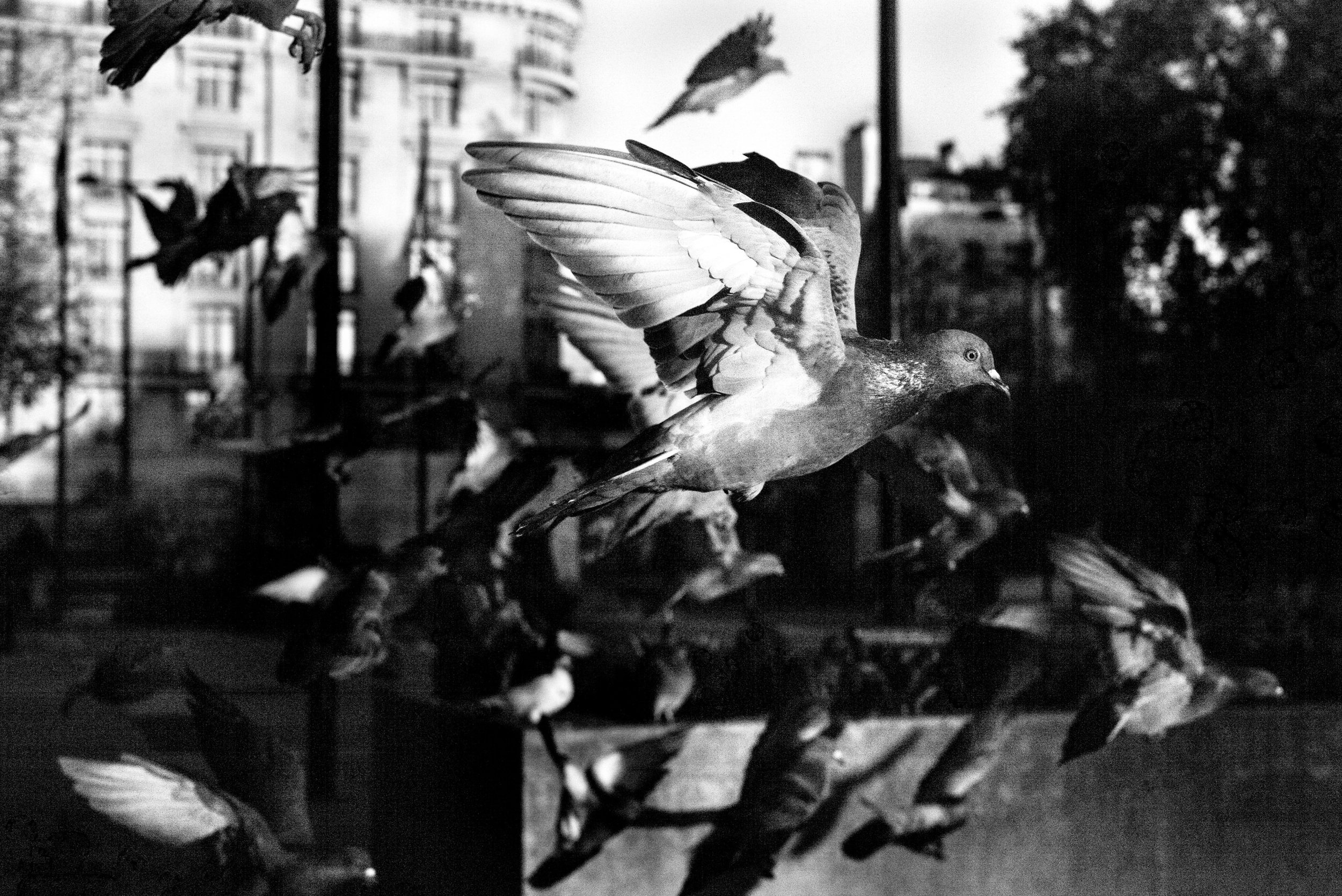 Pigeon Series - Alan Schaller - 17.jpg