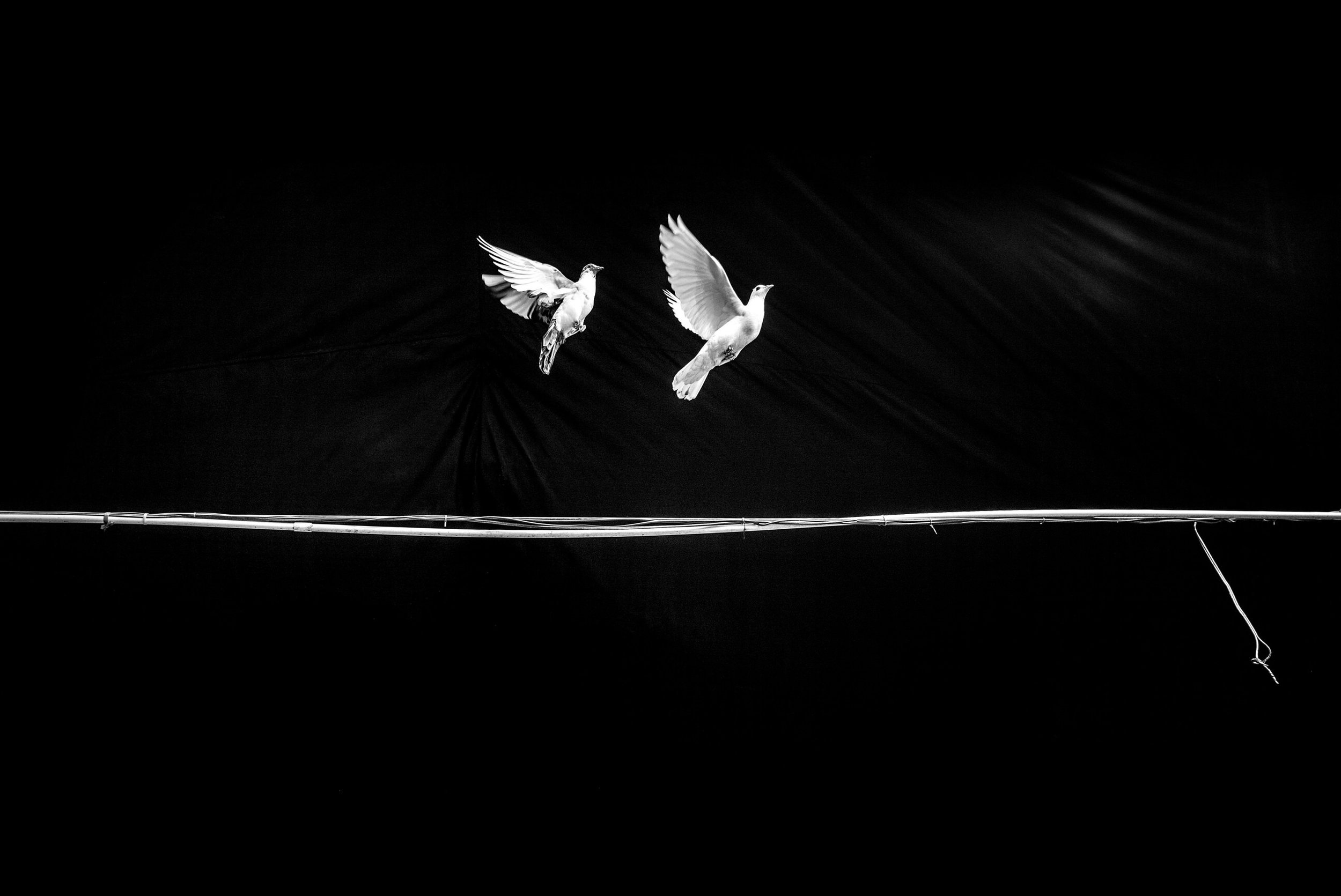 Alan Schaller Pigeons..jpg