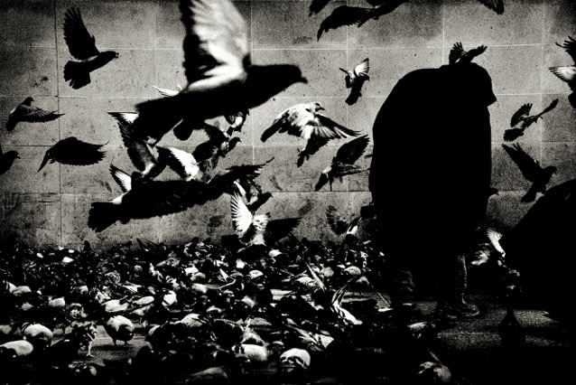 Andreas_H_Bitesnich_The_Birds_Paris_2013.jpeg
