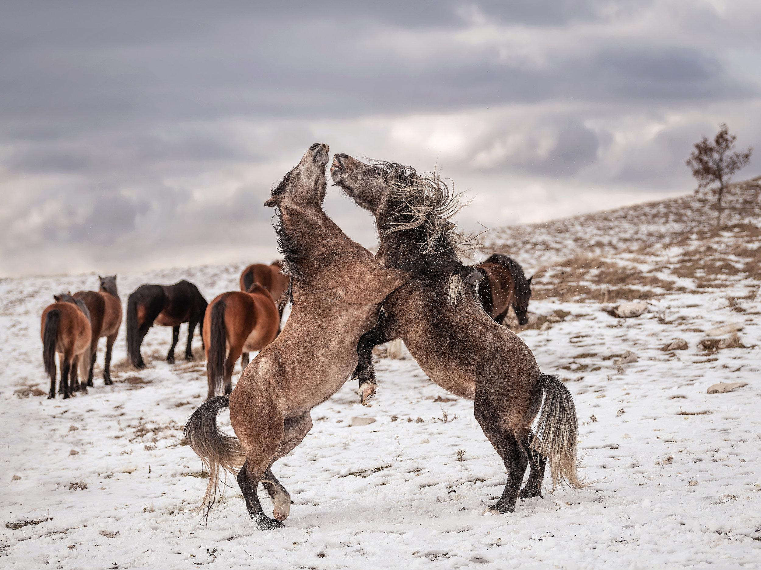 Wildpferde Bosnien Winter 2018