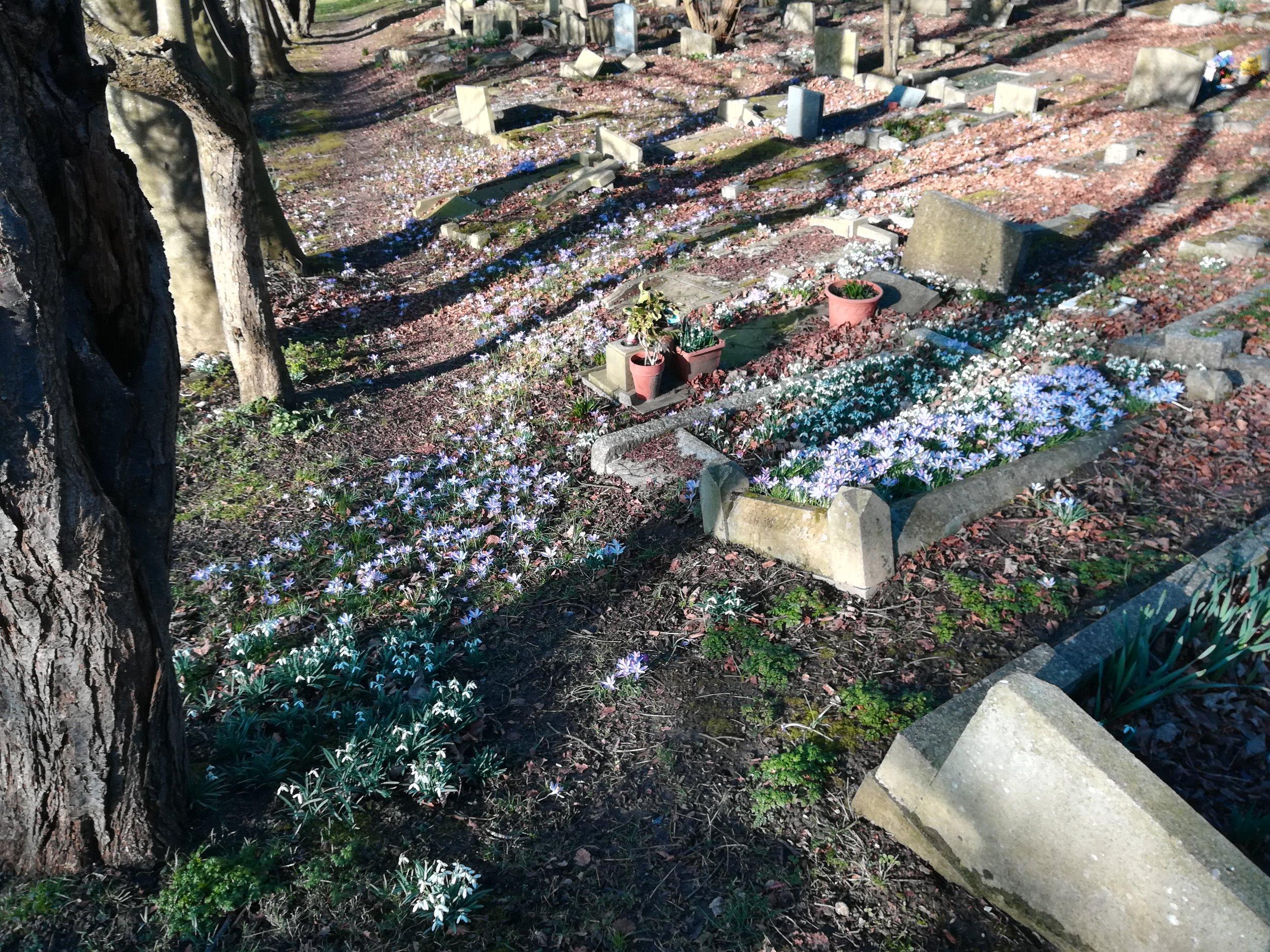 Snowdrops & Crocuses in St John's Churchyard.jpg