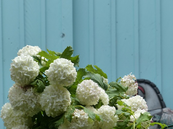 gerberoy-blue-flowers.jpg