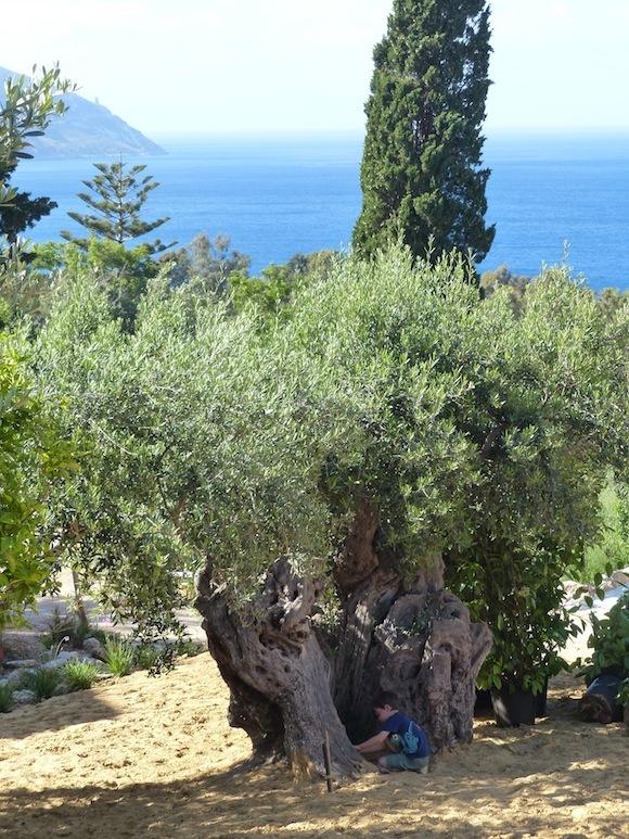 scopello-gabe-tree.jpg