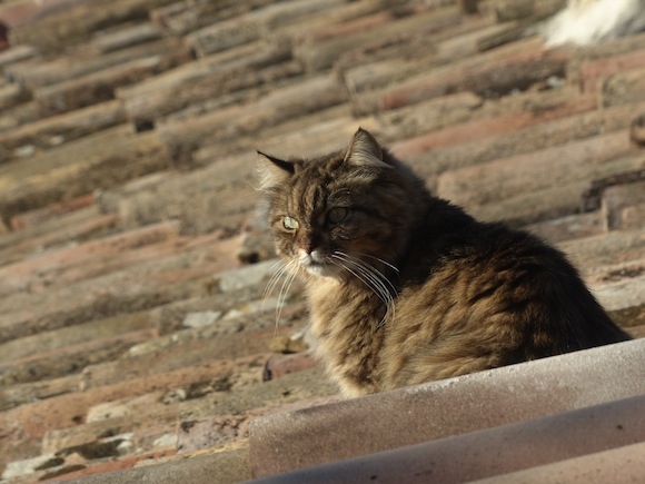 Roof Cat. I'm guessing she has an actual name.