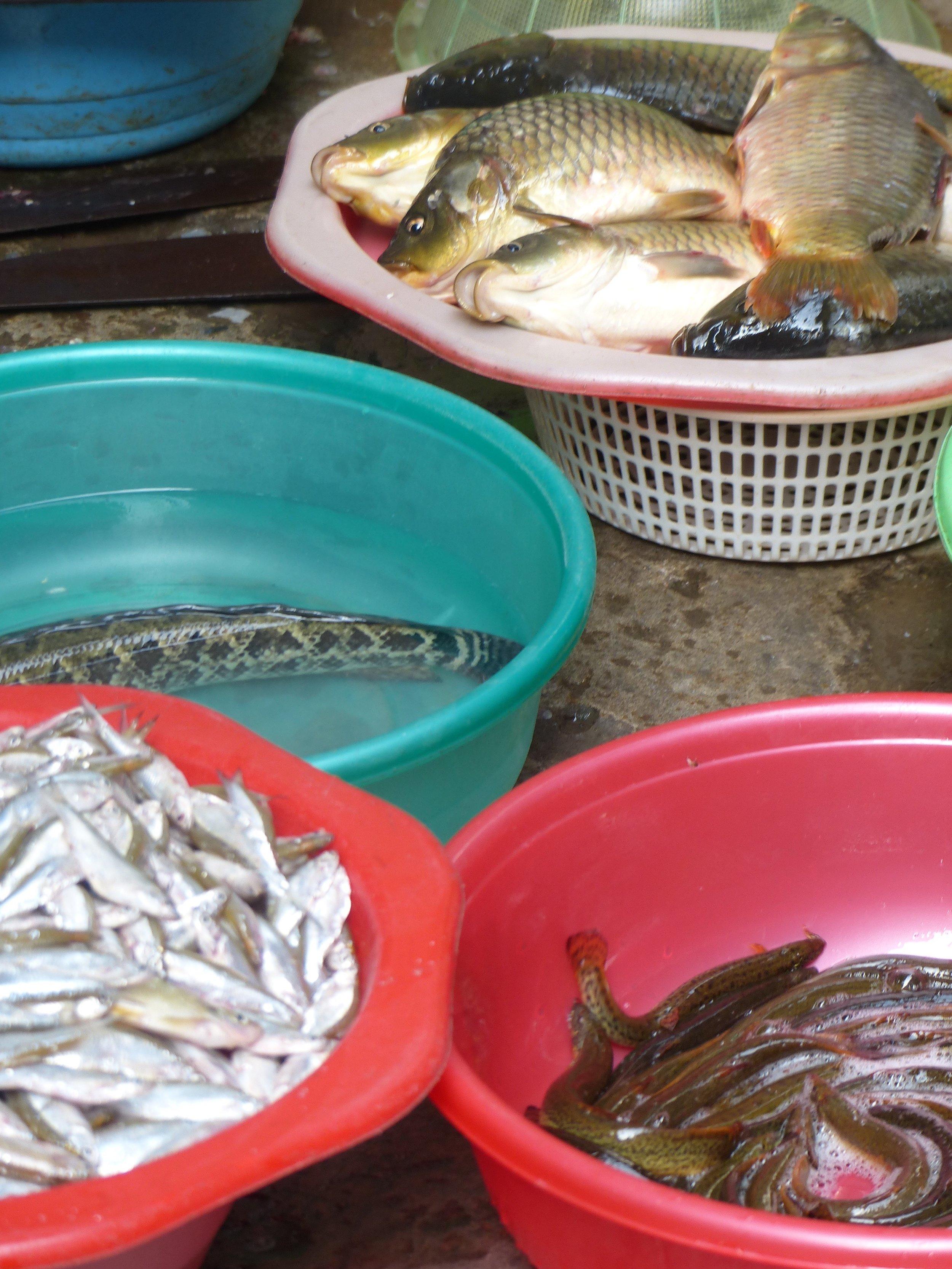 hanoi eels market