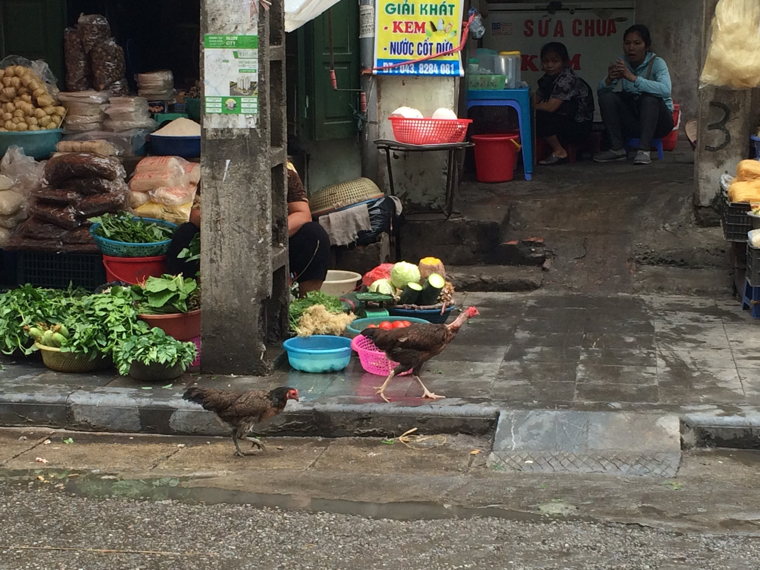 Chickens. Loose. In a city.